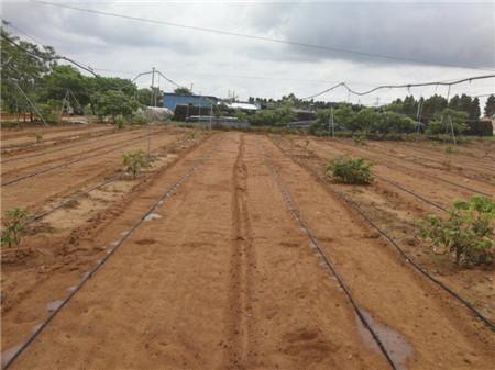 广东百亩火龙果用托莱斯水肥一体化设备实现智
